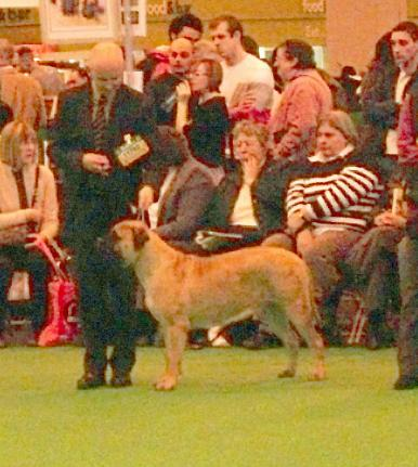 Rose at Crufts